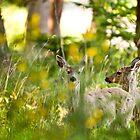 Fawns of Marrowstone Island, Washington by Chris Rusnak