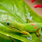 Anole Lizard, Kona, Hawaii by Chris Rusnak