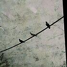 Birds on a Wire  by anjafreak