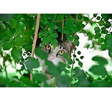 Hunting cat Photographic Print