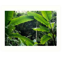 Thailand, banana trees (Musa sp.) in jungle Art Print