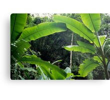 Thailand, banana trees (Musa sp.) in jungle Metal Print