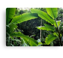 Thailand, banana trees (Musa sp.) in jungle Canvas Print
