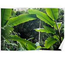 Thailand, banana trees (Musa sp.) in jungle Poster