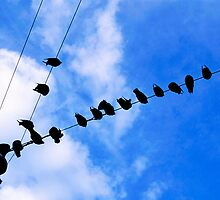 Pigeons perched on overhead wire by Sami Sarkis
