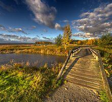 Autumn Scape IV by Petri Rautiainen