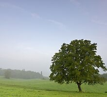 Lonely tree in a misty rural landscape by Patrick Morand