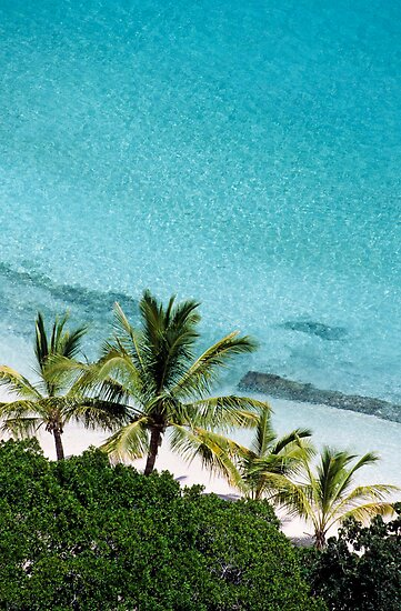 Palm Trees Against Cristal Blue Water by Sami Sarkis
