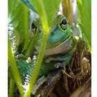 Motorbike Frog by Julia Harwood