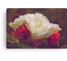 Your time is limited, so don't waste it living someone else's life. -- Steve Jobs Canvas Print