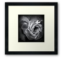Dark beauty Framed Print