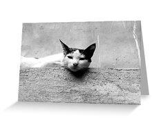 Feline Plateau  Greeting Card