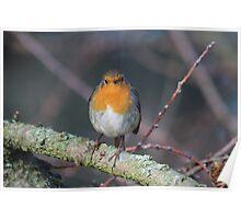 Grumpy Robin Poster