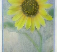 Helianthus Annuus I Phone Case by Diane Johnson-Mosley