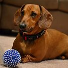 Fritz and the Saga of the Squeaky Ball by claireh