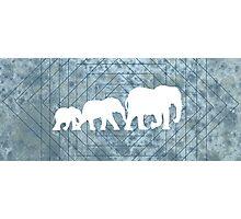 Walking With Elephants Photographic Print