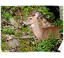 Fawns on the Way? Poster