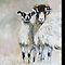 Swaledale Sheep iphone cover by Sue Nichol