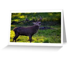 'Bellowing' Greeting Card