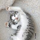 Cat Nap by © Joe  Beasley IPA