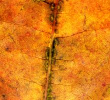 Detailed Fall Maple Leaf Texture 4 Sticker