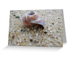 Nantucket Snail Shell Greeting Card