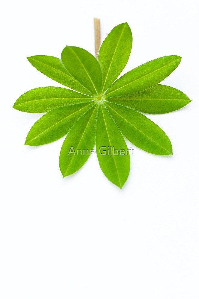 Lupin Leaf by Anne Gilbert