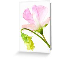 Sweet Pea 'Geranium Pink' Greeting Card