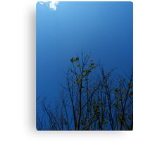 Autumn is with us Canvas Print