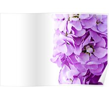 Scented Stocks Poster