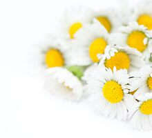 Bunch of Daisies by Anne Gilbert