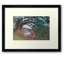 Forest Path 2011 Framed Print