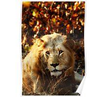 Kruger National Park, South Africa. 2009 I Poster