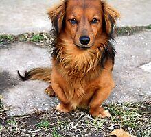 Dog Waiting For Treats by Carolyn  Fletcher