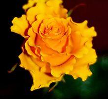 The rose of life for Brygida (Róża życia dla Brygidy) by MarekM