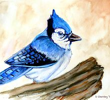 Blue Jay  by Jewel  Charsley