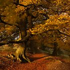 Leafy Lane by Anne Gilbert