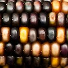 Ornamental Corn by Anne Gilbert