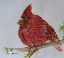 Hearty Cardinal by Jewel  Charsley