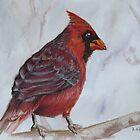 Blue Eyed Cardinal by Jewel  Charsley