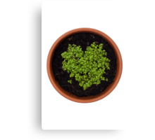 I Love Cress Canvas Print