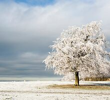 A Winter's Morning by Anne Gilbert