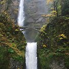 Beautiful Multnomah falls in Autum by Payne24