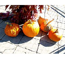 Happy  Thanksgiving Canada October 10, 2011 Photographic Print