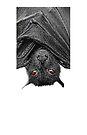 iPhone Case: Bat Phone by Yhun Suarez