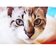 Cat #5 Photographic Print