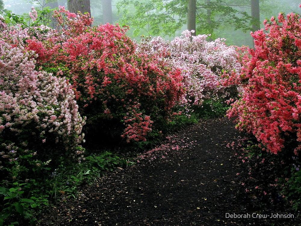 Azalea Walkway by Deborah Crew-Johnson