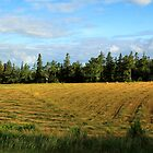 Prince Edward Island Hayfield Just Cut by Peggy Berger