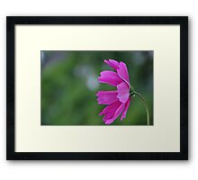 flower in pink Framed Print