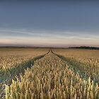 Wheat field tracks by davediver